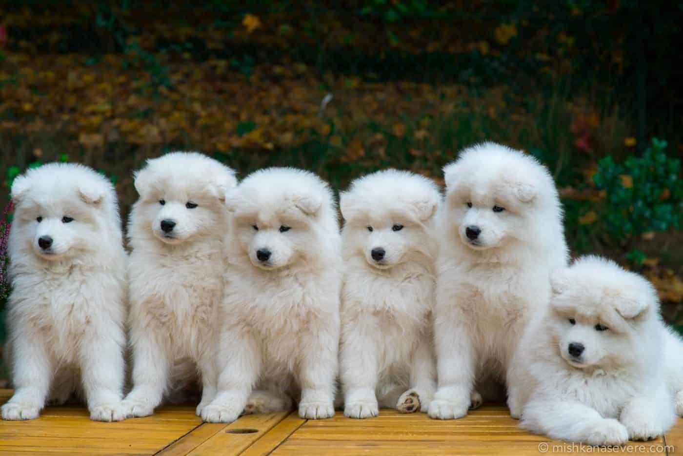Trường huấn luyện chó quận 10 uy tín giá rẻ tại Tphcm