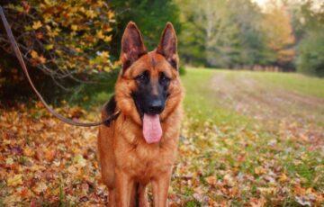 Trường huấn luyện chó quận 12 uy tín giá rẻ tại Tphcm