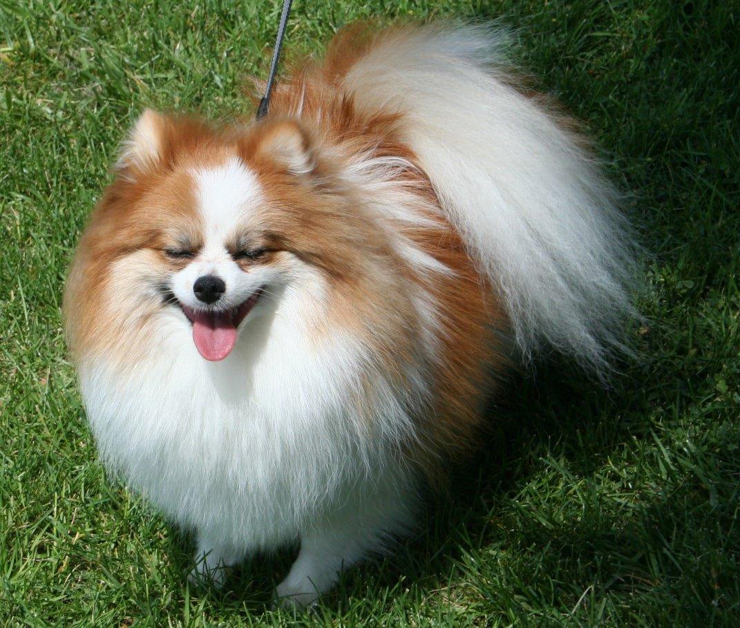 Trường huấn luyện chó quận 8 uy tín giá rẻ tại Tphcm