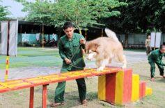 Hướng dẫn cách huấn luyện chó cơ bản tại nhà