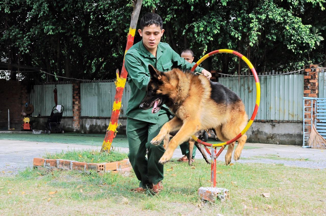 Trường huấn luyện chó cảnh khuyển Trung Đức Tphcm